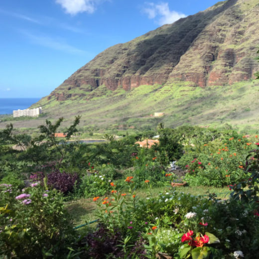 hawaii_flowers